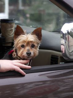 Traveling with your #pet: 5 essential pet #health records you should always bring along.