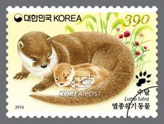 Endangered Wildlife, March 15, 2016, A female otter and her pups, 멸종위기 동물, 2016년 3월 15일, 새끼와 어미수달
