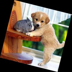 Bunny and puppy