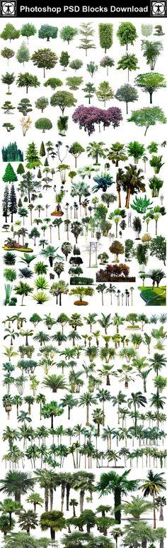 New Landscape Plants Architecture Photoshop Ideas Landscape Architecture Drawing, Landscape Drawings, Cool Landscapes, Landscape Design, Garden Design, Landscape Architects, Architecture Details, Country Landscaping, Modern Landscaping