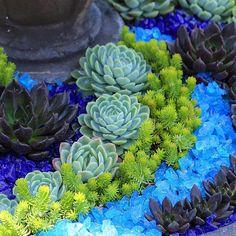 Echeverias and sedums amid crushed glass. #succulentchic #succulentlove #echeveria #dryfountain #gardenart #gardening #gardenwhimsy…