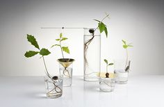 Floating Forest series of vases; Gardenista
