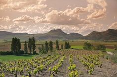 http://www.lariojaturismorural.com/            Visitar la Rioja con seleccion de Alojamientos,Restaurantes y Bodegas #bodegasrioja pic.twitter.com/dpmlr3czEv
