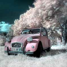 Shades of pink infrared photography