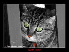 Gatto ericino by Gianfranco Rinaldi on 500px