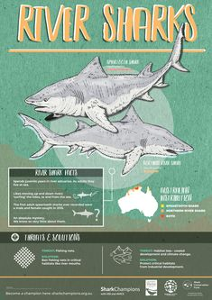 Biology Poster, Marine Conservation Society, Shark Painting, Shark Facts, Shark Pictures, Species Of Sharks, Fun Facts About Animals, Cute Shark, Animal Tracks