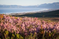 If you're looking for a scenic adventure or a backdrop for your next Instagram snapshot, take a trip along the #GardenRoute and explore the area's botanical wonderland