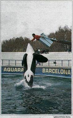 Ulises at Barcelona Aquarium