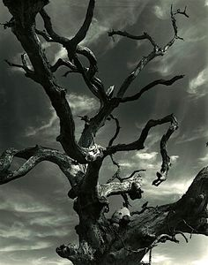 Clarence John Laughlin, The Unending Tree, 1953