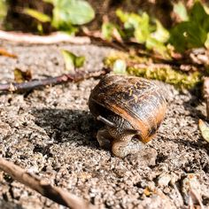 """Dearbhaile   Travel & Wildlife on Instagram: """"Snails are awesome and I will fight anyone who says otherwise. Some snail facts, just because: - snails can live for up to 25 years,…"""" Snail Facts, I Will Fight, Who Said, Snails, Wild Life, Live, Awesome, Instagram Posts, Travel"""