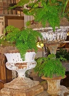 rue 27 maison (moss is built up to cover the height of original potted form)