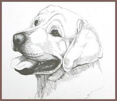 All About The Friendly Labrador Dogs And Kids Animal Sketches, Animal Drawings, Pencil Drawings, Art Sketches, Art Drawings, Drawings Of Dogs, Dog Line Art, Dog Art, Tier Fotos