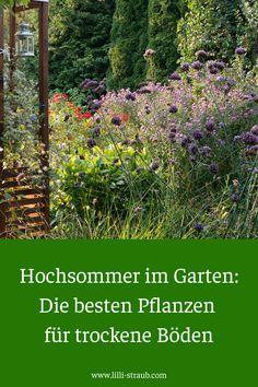 Big Garden, Love Garden, Home And Garden, Little Gardens, Back Gardens, Balcony Plants, Deco Floral, Garden Cottage, Clematis