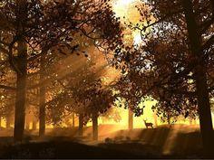 Sunset in the #forest #EllenRothAuthor