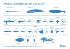 The Largest Creatures in the Ocean