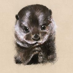 Happy World Animal Day   We are all huge animal lovers at Bill Skinner! Here's one Lucy from our studio sketched for our AW16 Lookbook of the cutest Otter being incredibly adorable! ❤️✨ . . . #BillSkinner #Otter #Otters #illustration #illustrator #illustrations #sketch #artistsoninstagram #craft #pencilsketch #worldanimalday ✏️Lucy Shaw