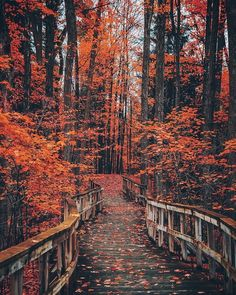 The Best Women's Spiritual Retreats Around the World Looking for a way to connect with your highest self on your next vacation? These are some of the best women's spiritual retreats around the world. Autumn Photography, Landscape Photography, Image Halloween, Autumn Cozy, Autumn Forest, Autumn Scenes, Autumn Aesthetic, Blue Aesthetic, All Nature