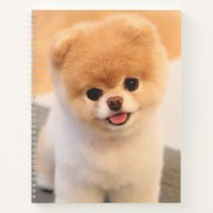 Teacup Pomeranian Puppies for Free Cute Little Puppies, Cute Puppies, Cute Dogs, Dogs And Puppies, Baby Animals Pictures, Cute Baby Animals, Small Animals, Animals Dog, Dog Haircuts