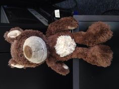 Found on 01 Jul. 2016 @ East Pier, Dun Laoghaire, Co Dublin, Ireland. Brown Bear with cream coloured tummy, cream face, ears and paws. Visit: https://whiteboomerang.com/lostteddy/msg/tpvyus (Posted by Colm on 01 Jul. 2016)