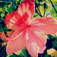 hawaii tropical flowers <3
