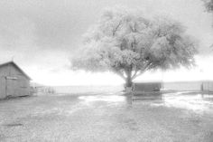 """After the Storm"", Photo by Harriet Blum. I shot this photo in Crowley, LA.  I used black and white infrared film.  It had just poured and this is what I saw when I walked outside."