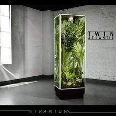 Cool way to house a reptile. I would love to have this for a couple of tree frogs!