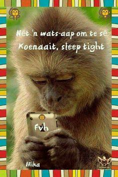 Net 'n wats-aap om te sê koenaait, sleep tight | Afrikaans is pret
