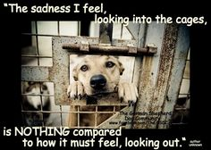 """""""The sadness I feel looking into the cages, is nothing compared to how it must feel looking out."""""""