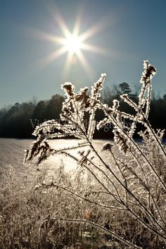 Sunburst and ice crystals Ice Crystals, Sunrises, Beautiful Landscapes, Winter Wonderland, Snowflakes, Muse, Scenery, Lens, Photos