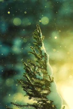 Pine Needles In The Snowfall byJoni Niemeläon 500px