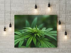 Cannabis weed canvas wall decor canvas ready to hang on the wall picture beautiful home decor wall art cannabis flower picture by funkytshirtsfactory on Etsy Canvas Wall Decor, Home Decor Wall Art, Christmas Stocking Fillers, Canvas Home, Flower Pictures, Picture Wall, Cannabis, Weed, Beautiful Homes