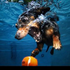 Seth Casteel underwater Dog Shoots! Awesome!