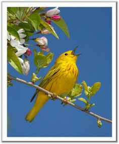 Scales:  Baby Birdie Song