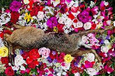 Natura Morta by Maria lonova-Gribina