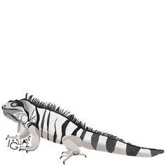 I is for Iguana #animalart