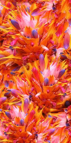 Orange Flor..
