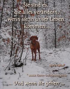 Der beste Freund - Hunde - The best friend - dogs - Cool Tattoos With Meaning, Best Friend Tattoos, Dog Tattoos, Dog Quotes, Dog Pictures, Funny Dogs, Animals And Pets, Best Friends, About Me Blog