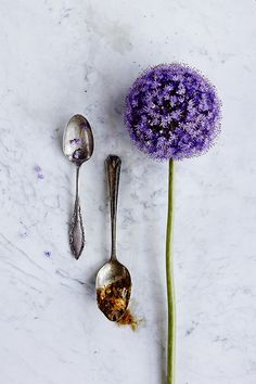 #Cooking with #Alliums, The #Flowers #Pretty Enough to #Eat on the #AnthroBlog