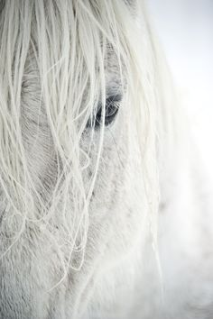White Horse beauty