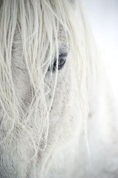 . white hair, anim, horses, pest control, white hors, beauty, whitehors, eye, snow white