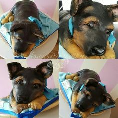 Archibald the German Shepherd puppy. Carved 3d dog cake. Hand painted details.