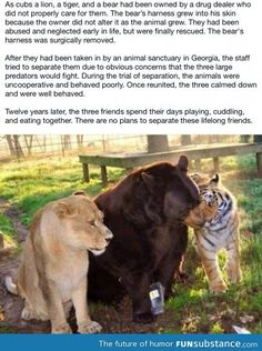 Lion, tiger, and bear :3 this is adorable <3