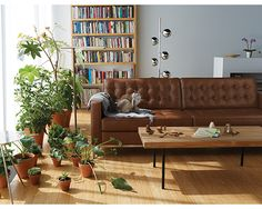 One Design, Two Budgets: An Organic Modern, Eclectic Living Room Eclectic Living Room, Living Spaces, Living Rooms, Do It Yourself Sofa, Home Air Purifier, Indoor Greenhouse, Thing 1, Loft, Leather Sofa