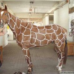 Horse is painted up as a giraffe for its Halloween costume. This is AWESOME!!!!!!