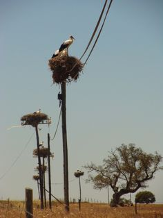 Storks, in their nests, in Alentejo, Portugal Visit Portugal, Portugal Travel, Spain And Portugal, Algarve, Beautiful Birds, Beautiful Places, Bon Plan Voyage, Photos Voyages, Belle Photo