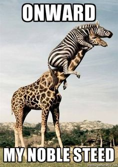 What a great zebra.
