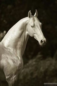 akhal-teke - this one is definitely a faerie horse!