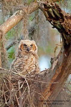 BEAUTIFUL OWL !❤❤