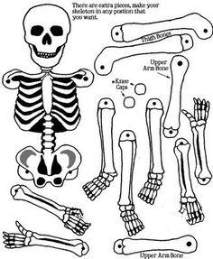 Além do Caderno: Montando o esqueleto com Radiografias