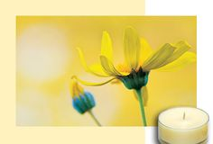 Fresh Home by #PartyLite - Brighter Days  Will take away those pesky pet odors, Love It!!!  www.partylite.biz/karensolak